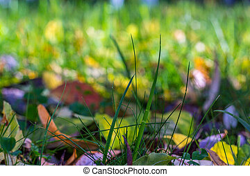 Grass on a background of leaves