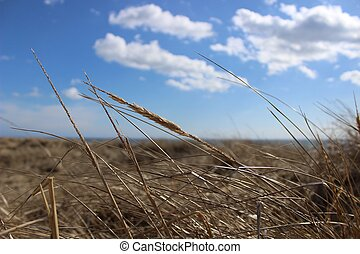 grass on a background of sky and sea