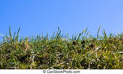 grass on a background of sky