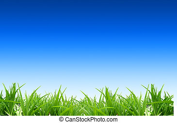 grass on a background of the blue sky