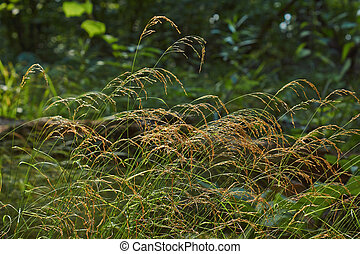Grass on a background of the dark forest.