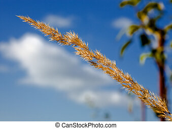 Grass on a background of the sky