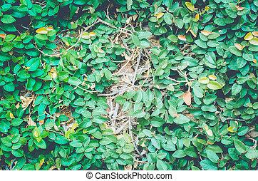 Grass on a brick wall