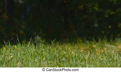 Grass on a dark background. - Grass sways in the park on a...