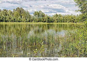 Grass on a small lake