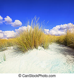 Grass on a white sand dunes beach and blue sky