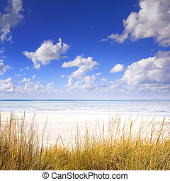 Grass on a white sand dunes beach, ocean and blue sky