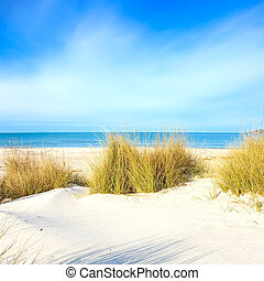 Grass on a white sand dunes beach, blue ocean and sky on background