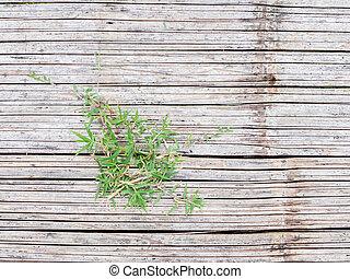 grass on bamboo floor