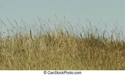 Grass on blue sky background.