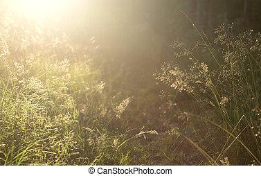 Grass on blurred background.