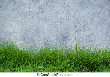 grass on cement wall