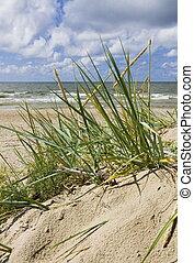 Sea grass on sand dune of pretty tropical beach