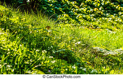 grass on forest glade closeup - forest glade close up of...