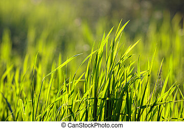 grass on forest glade closeup in sun light - forest glade...