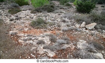 grass on stony ground on the island of Cyprus - Dry grass on...