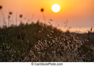 Grass on sunset background