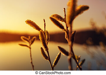 Grass on the background of sunset sky