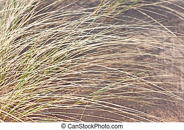 Grass on the beach in daylight