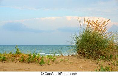 Seagrass on the beach against a blue sky
