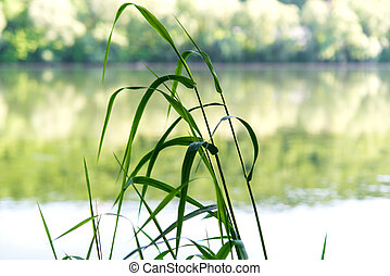 grass on the river