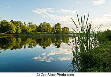 grass on the shore of a pond on summer evening