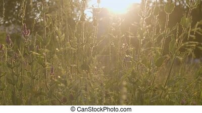 Grass on the sunset