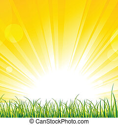 Vector illustration of grass on the sunshine rays.