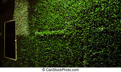 Grass on the wall