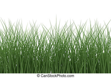 Grass on white background. 3d rendering