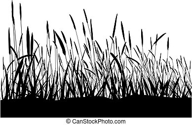 Grass On White Background - Black blade of grass isolated on...