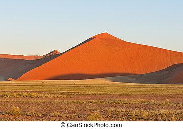Grass, Oryx and dune landscape near Sossusvlei, Namibia