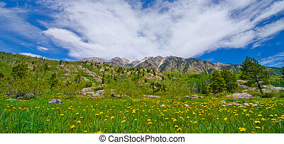 Grass Pasture in the San Juan Mountains in Colorado