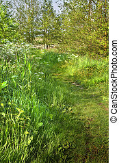 Grass path in country in spring