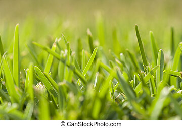 grass perspective (soft focus) - a detail of grass in...