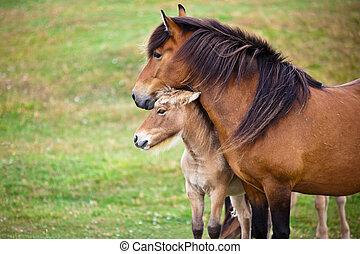 grass., pferd, brauner, fohlen, grünes feld, sie
