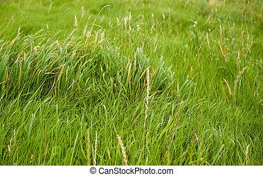 Grass - Field of grass