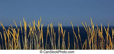 Grass Reeds Beach Blue Sky