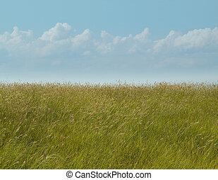 Grass Reeds