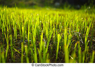 Grass regenerate in the garden.
