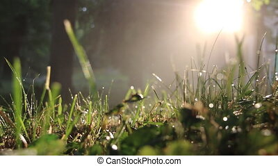 grass right after a morning rain
