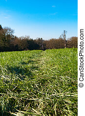 Grass roots - Low angle shot through grass on a sunny day