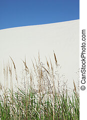 Grass sand and sky