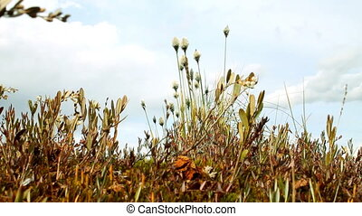 Grass shivering in wind - Grass finely shivering in wind. ...