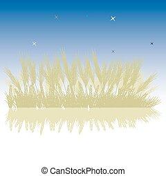 Grass silhouette wheat, night sky