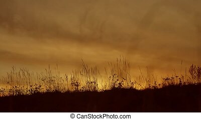 grass silhouettes background with sun set.