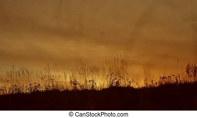 grass silhouettes background with sun set lifestyle the...