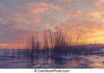 Grass silhouettes in a frozen lake