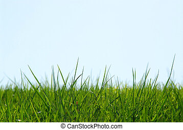 Grass sky background - Background of grass and sky