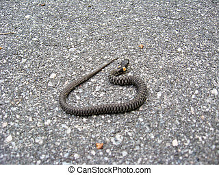 grass-snake on the road